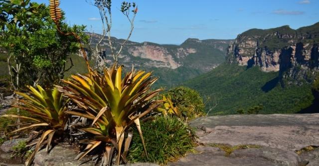 muitas-especies-de-bromelias-podem-ser-encontradas-pelo-vale-do-pati-1424179263062_956x500